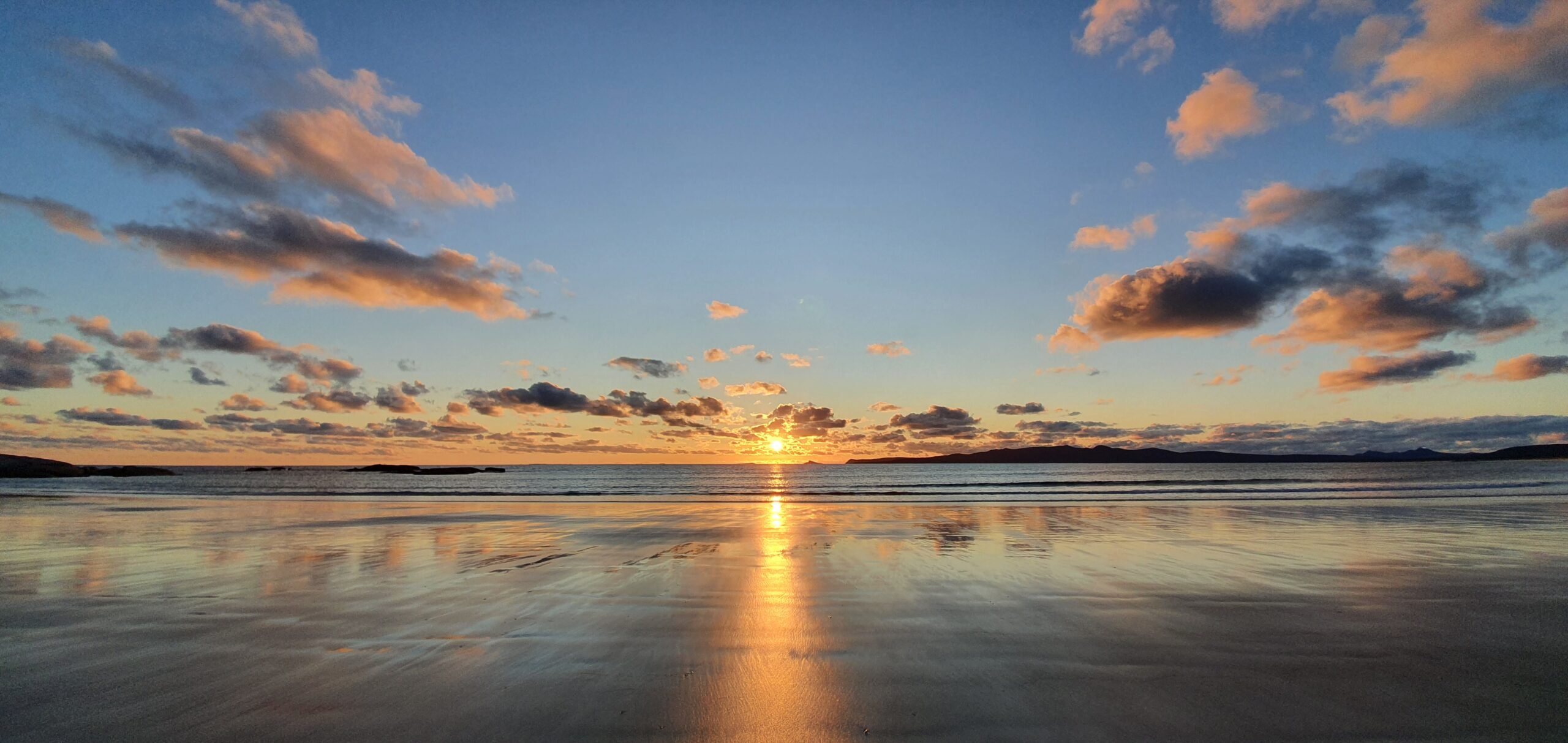 Purple Swamphen Flinders Island sunset